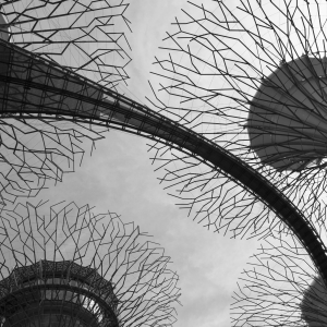 The Supertrees, Singapore
